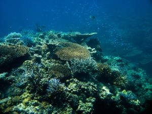 Korallen Hausriff Embudu