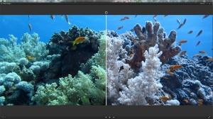 Unterwasser Weißabgleich