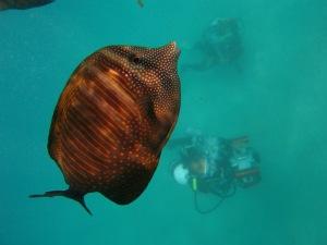 Grundlagen Unterwasserfilm - Unterwasservideo