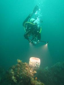 Trübe Sicht unter Wasser auf Bali im April 2015
